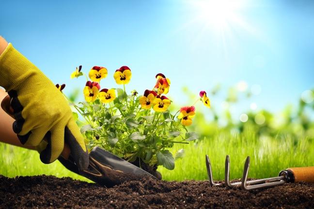 Planting Flowers in a garden,Closeup.