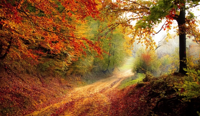 road-forest-season-autumn